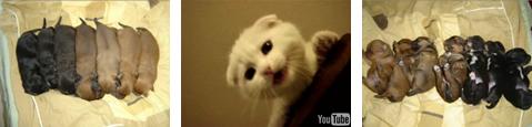 かわゆい犬猫.jpg