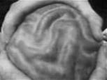 脳みそプルン.jpg