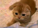 たわしのようなネコ『たわしねこ』.jpg