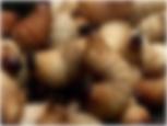 グロ、世界のゲテ食文化を考える.jpg