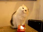 テルミンを演奏するネコ『テルミン猫』.JPG