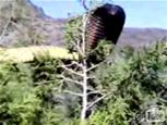 全長15メートルのキングコブラ.jpg